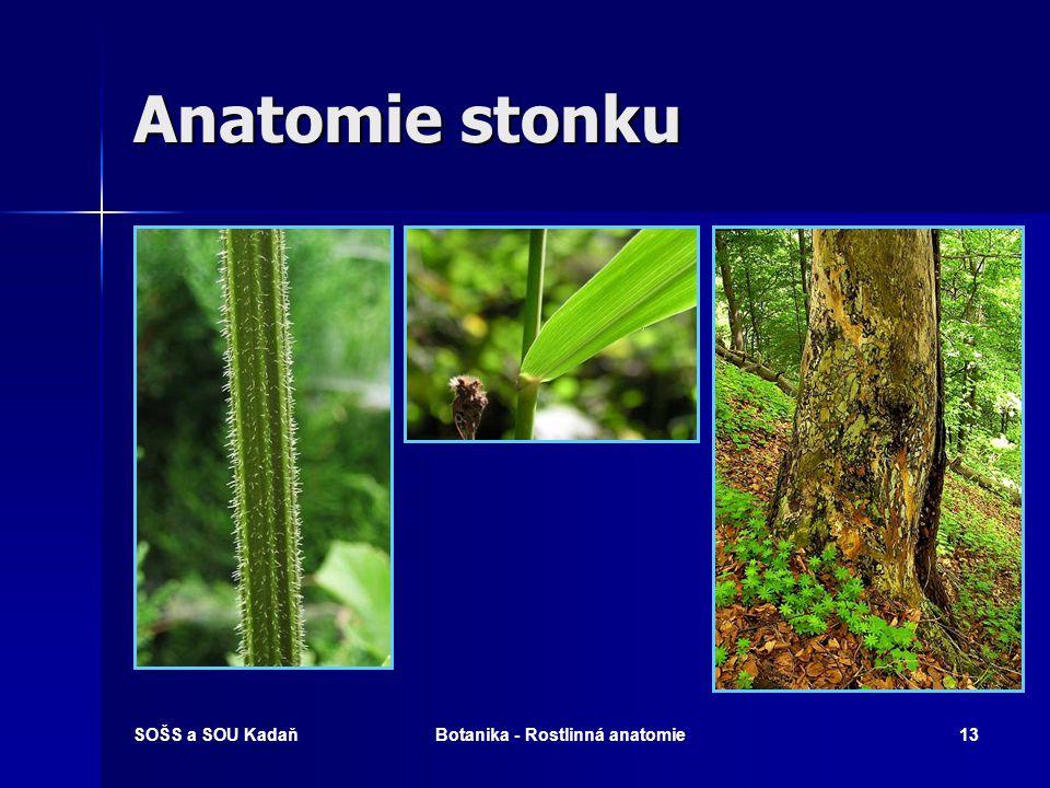 SOŠS a SOU KadaňBotanika - Rostlinná anatomie12 Anatomie kořene kv kořenový vlásek r rhizodermis par parenchym en endodermis pe pericykl x xylém d dřeň Příčný řez kořenem bobu setého