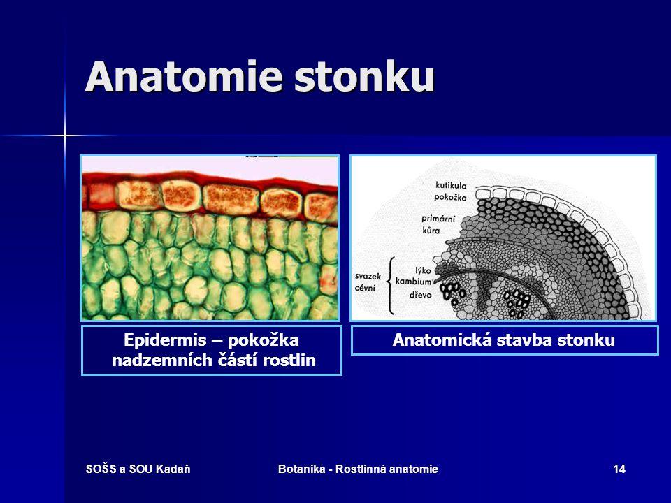 SOŠS a SOU KadaňBotanika - Rostlinná anatomie13 Anatomie stonku
