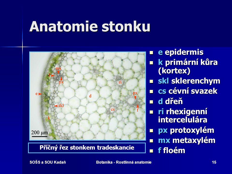 SOŠS a SOU KadaňBotanika - Rostlinná anatomie14 Anatomie stonku Epidermis – pokožka nadzemních částí rostlin Anatomická stavba stonku