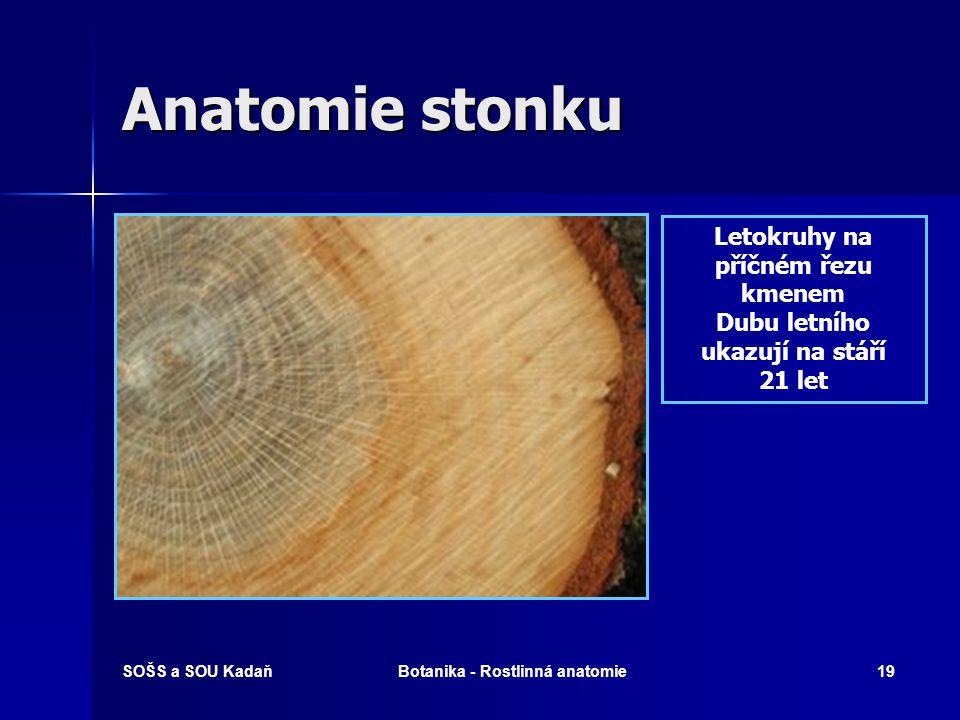 SOŠS a SOU KadaňBotanika - Rostlinná anatomie18 Anatomie stonku Letokruh Útvar dřevin, který vzniká při nestálém růstu dřeviny do šířky.