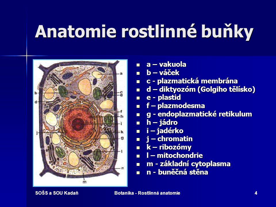 SOŠS a SOU KadaňBotanika - Rostlinná anatomie3 Rostlinné buňky Anatomie buňky