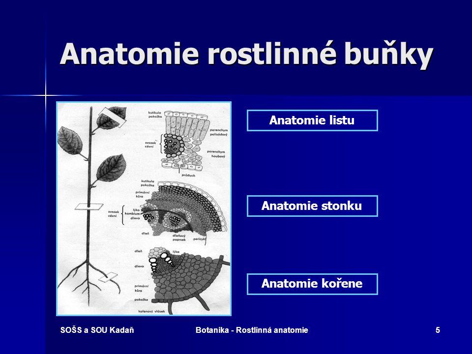 SOŠS a SOU KadaňBotanika - Rostlinná anatomie4 Anatomie rostlinné buňky a – vakuola b – váček c - plazmatická membrána d – diktyozóm (Golgiho tělísko) e - plastid f – plazmodesma g - endoplazmatické retikulum h – jádro i – jadérko j – chromatin k – ribozómy l – mitochondrie m - základní cytoplasma n - buněčná stěna