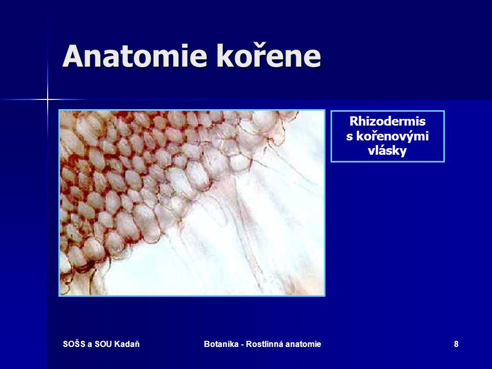 SOŠS a SOU KadaňBotanika - Rostlinná anatomie7 Anatomie kořene Příčný průřez kořenem