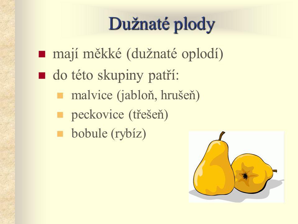 Dužnaté plody mají měkké (dužnaté oplodí) do této skupiny patří: malvice (jabloň, hrušeň) peckovice (třešeň) bobule (rybíz)