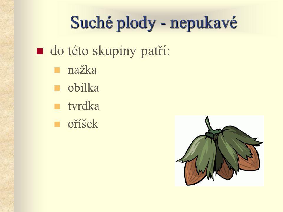 Shrnutí Plody dužnatésuché malvice peckovice bobule pukavé tvrdka měchýřek lusk tobolka nepukavé šešulka šešule nažka obilka oříšek