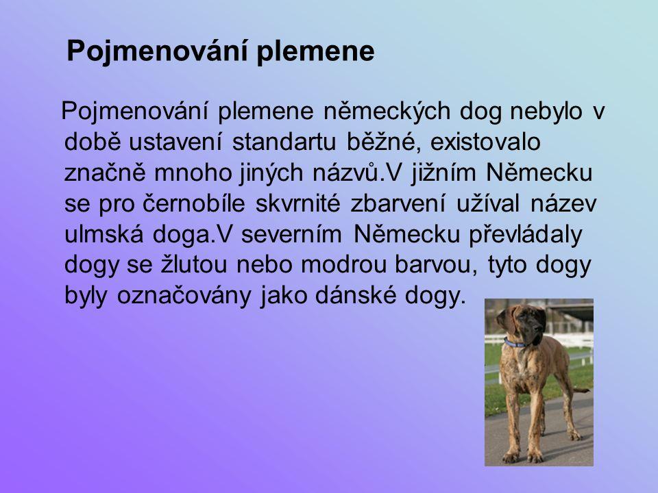 """Barva: Německá doga je chována ve třech samostatných varietách: žluté a žíhané, skvrnit a černé a modré.To odpovídá požadavkům příznivců tohoto plemene.Je ale možné rozšířit genofond plemene, aniž by byl opuštěn princip čistých barev.Například bílá doga vzniká """"mutací .Ne moc známá a rozšířená je barva šedý tygr, u nás není standardní."""