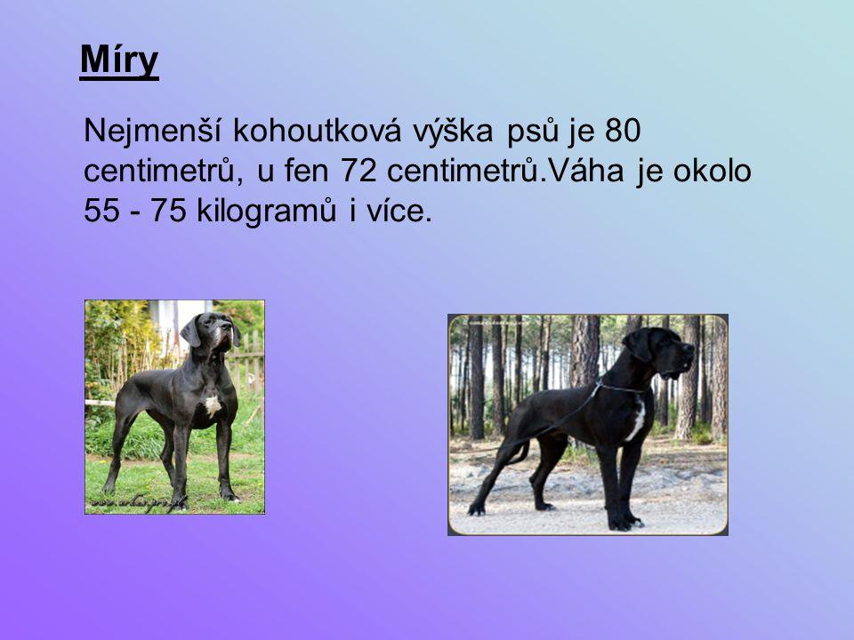 Nejmenší kohoutková výška psů je 80 centimetrů, u fen 72 centimetrů.Váha je okolo 55 - 75 kilogramů i více.