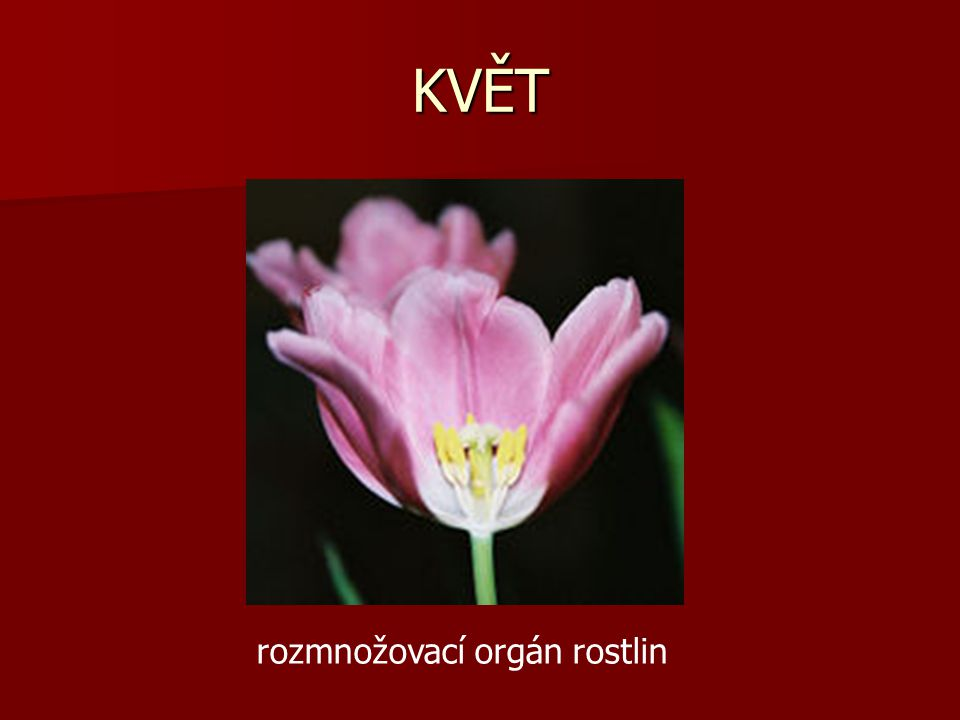 KVĚT rozmnožovací orgán rostlin