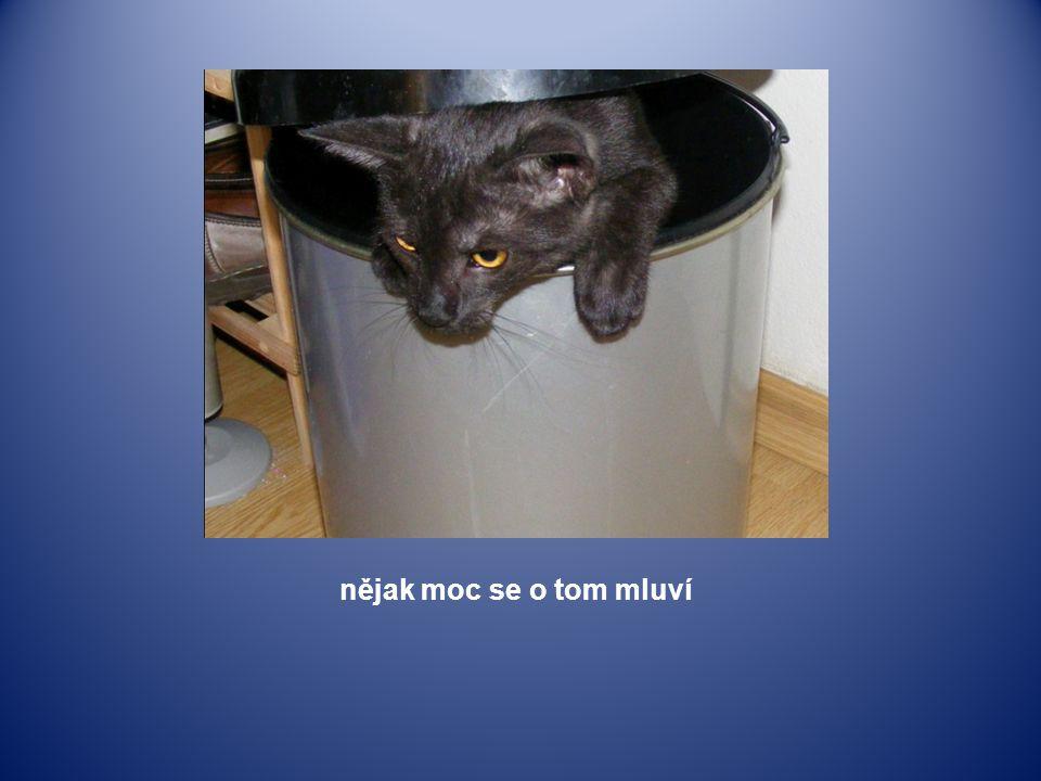 kočičí mamka už koťata odstavila