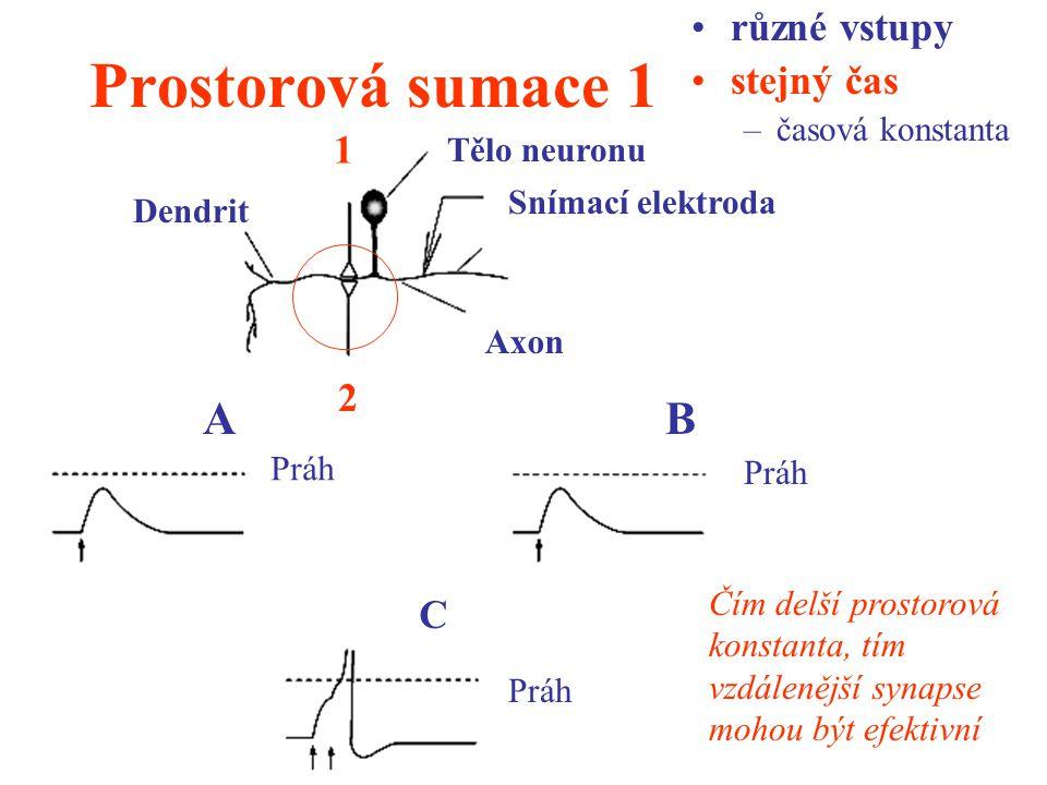 Prostorová sumace 1 různé vstupy stejný čas –časová konstanta 1 2 Dendrit Axon Snímací elektroda Tělo neuronu AB C Práh Čím delší prostorová konstanta