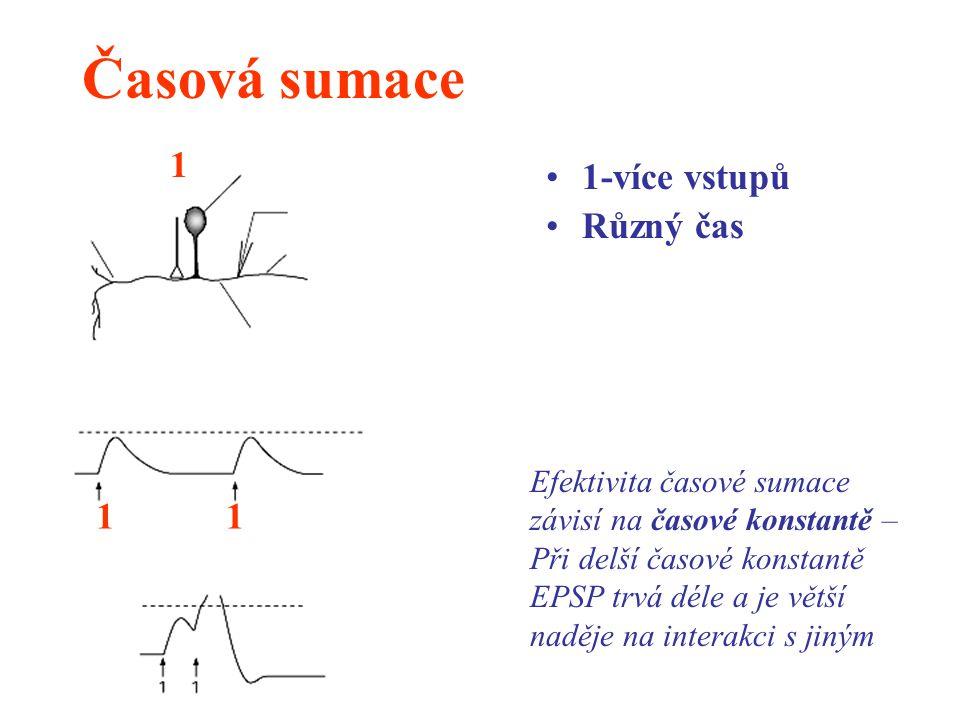 Časová sumace 1-více vstupů Různý čas 1 11 Efektivita časové sumace závisí na časové konstantě – Při delší časové konstantě EPSP trvá déle a je větší