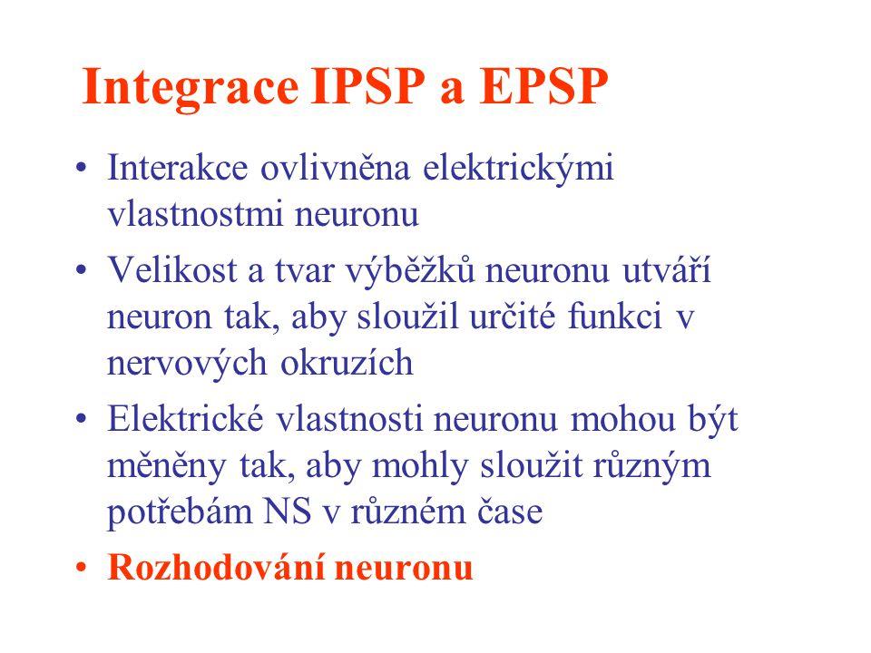 Integrace IPSP a EPSP Interakce ovlivněna elektrickými vlastnostmi neuronu Velikost a tvar výběžků neuronu utváří neuron tak, aby sloužil určité funkc