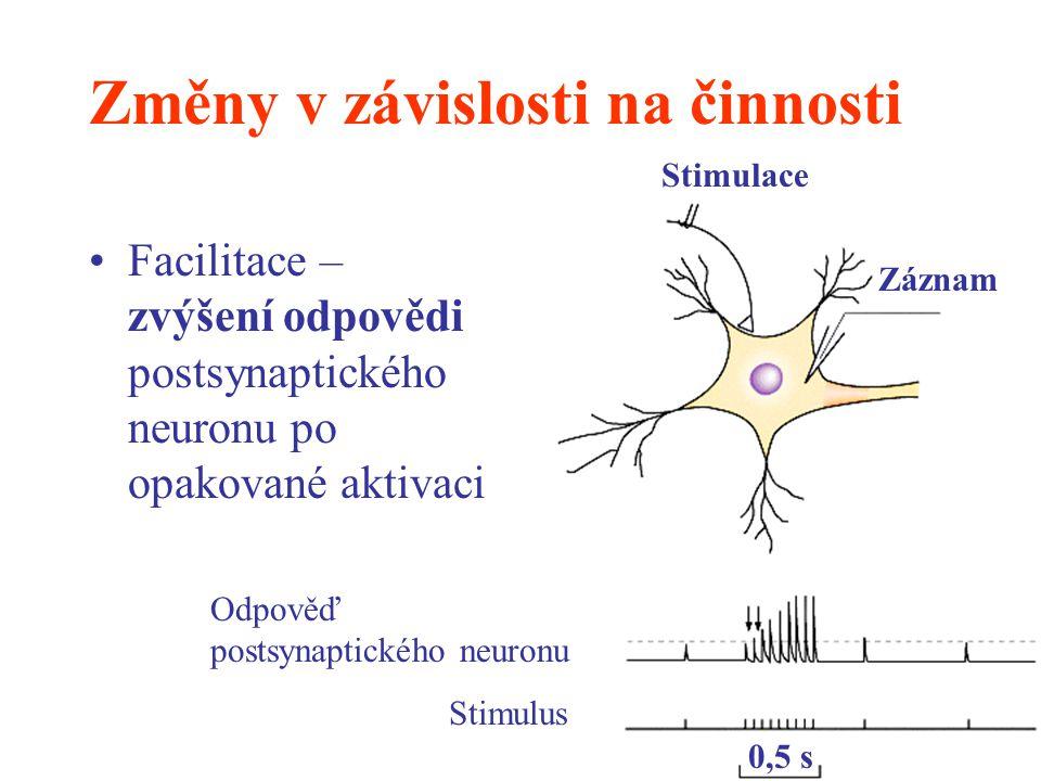 Změny v závislosti na činnosti Facilitace – zvýšení odpovědi postsynaptického neuronu po opakované aktivaci Stimulace Záznam Odpověď postsynaptického