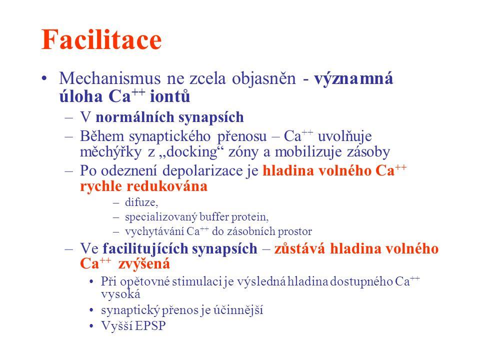 Facilitace Mechanismus ne zcela objasněn - významná úloha Ca ++ iontů –V normálních synapsích –Během synaptického přenosu – Ca ++ uvolňuje měchýřky z