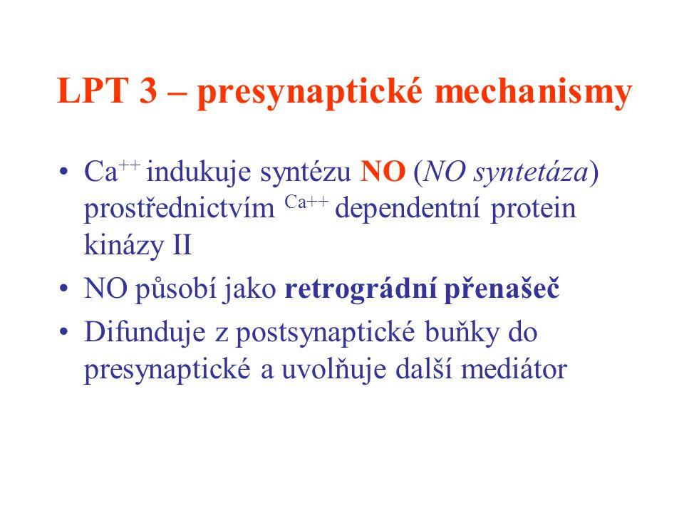 LPT 3 – presynaptické mechanismy Ca ++ indukuje syntézu NO (NO syntetáza) prostřednictvím Ca++ dependentní protein kinázy II NO působí jako retrográdn