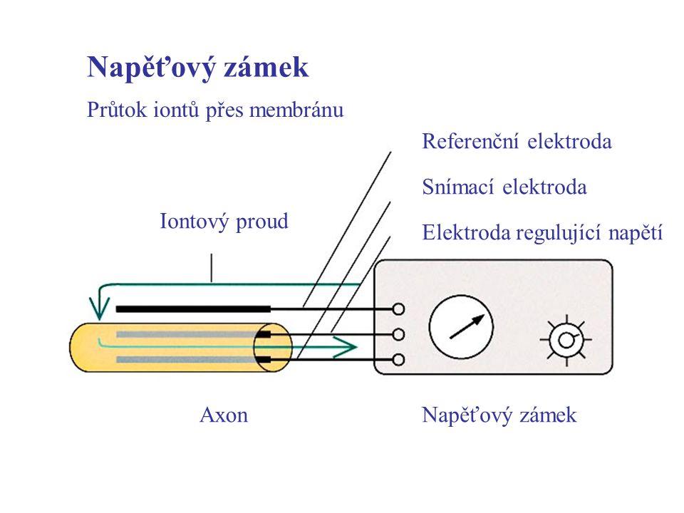 Napěťový zámek Průtok iontů přes membránu Iontový proud AxonNapěťový zámek Referenční elektroda Snímací elektroda Elektroda regulující napětí
