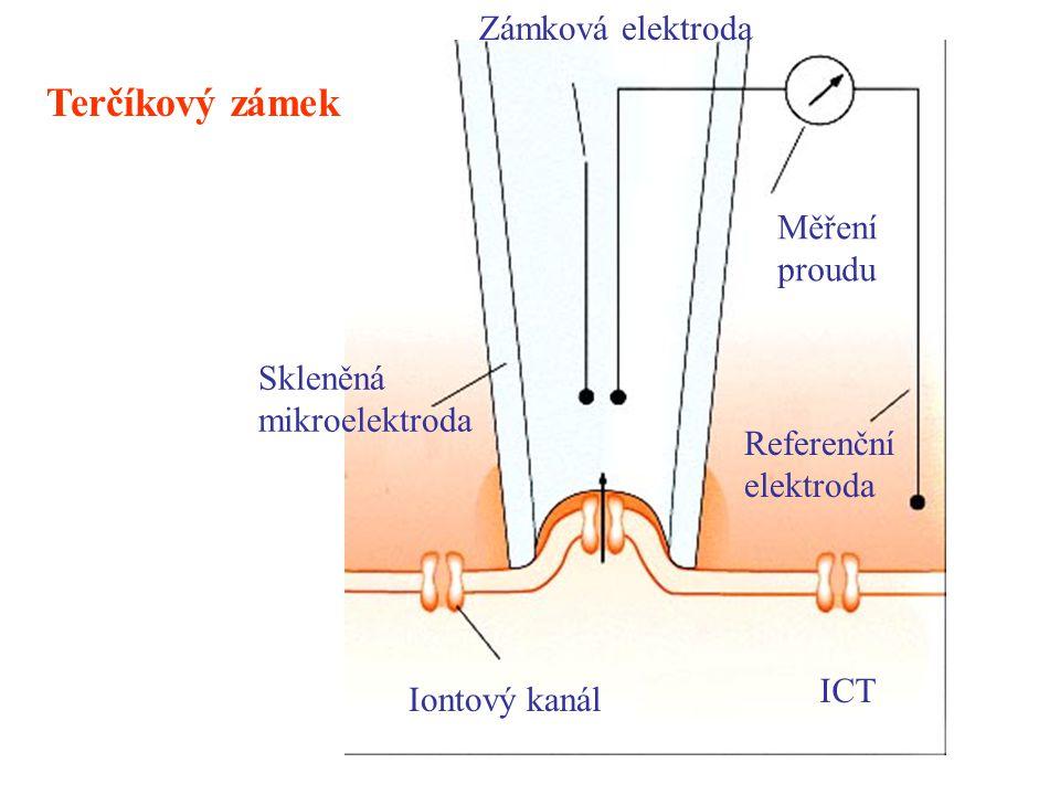 Iontový kanál ICT Zámková elektroda Měření proudu Referenční elektroda Skleněná mikroelektroda Terčíkový zámek