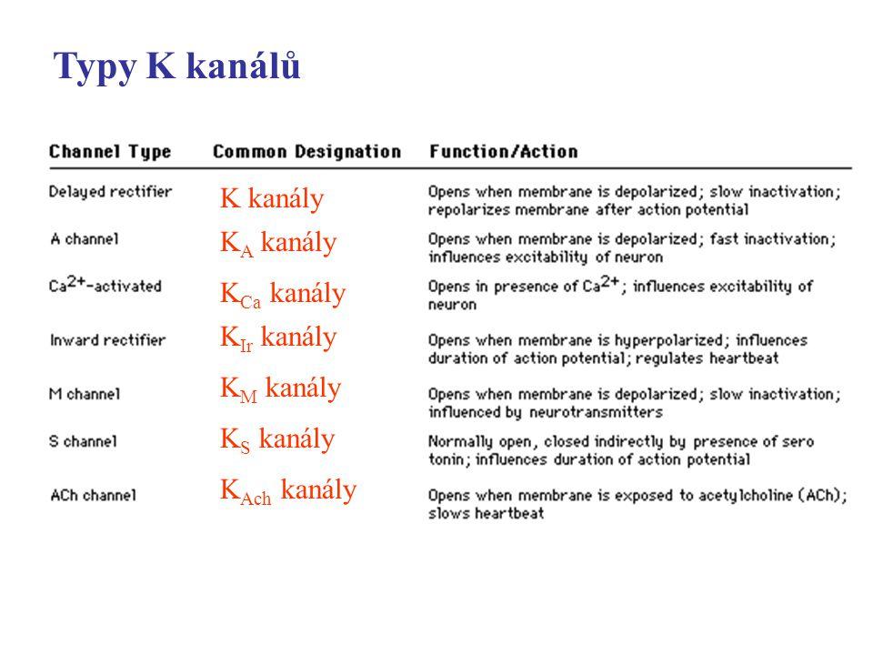 Typy K kanálů K kanály K A kanály K Ca kanály K Ir kanály K M kanály K S kanály K Ach kanály