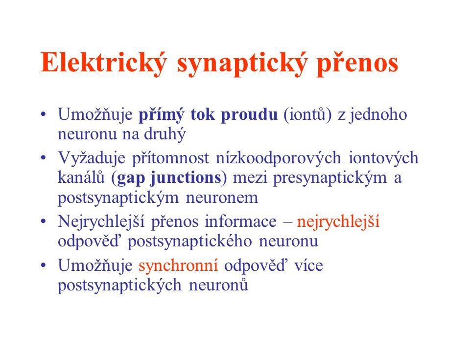 Elektrický synaptický přenos Umožňuje přímý tok proudu (iontů) z jednoho neuronu na druhý Vyžaduje přítomnost nízkoodporových iontových kanálů (gap ju