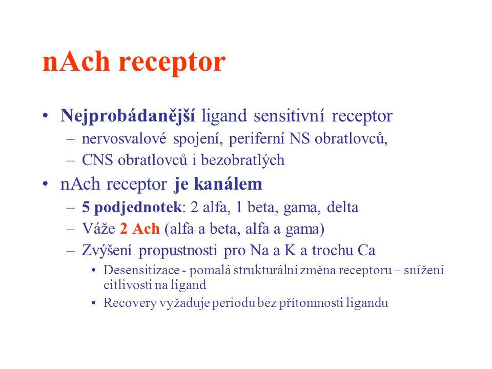nAch receptor Nejprobádanější ligand sensitivní receptor –nervosvalové spojení, periferní NS obratlovců, –CNS obratlovců i bezobratlých nAch receptor