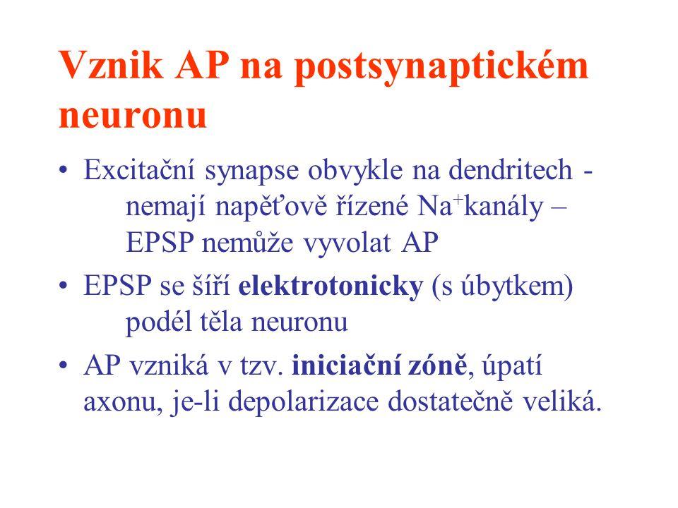 Vznik AP na postsynaptickém neuronu Excitační synapse obvykle na dendritech - nemají napěťově řízené Na + kanály – EPSP nemůže vyvolat AP EPSP se šíří