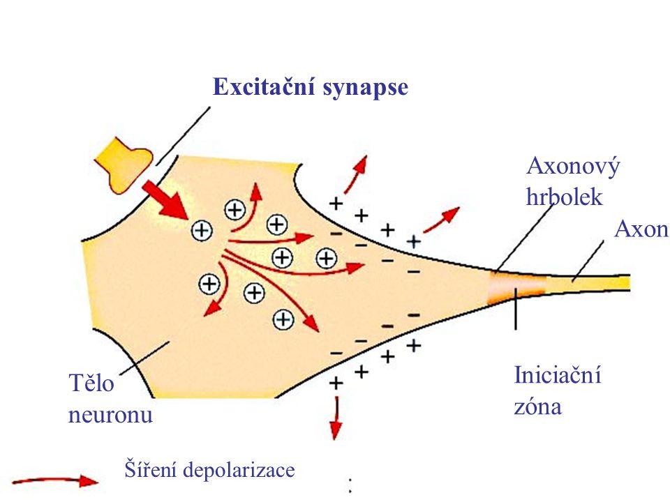 Excitační synapse Tělo neuronu Axonový hrbolek Iniciační zóna Axon Šíření depolarizace