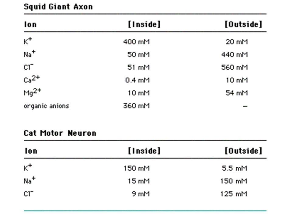 Výpočet klidových membránových potenciálů E K+ E NA+ E Cl- E Ca++ Ln. 2,3 = log10