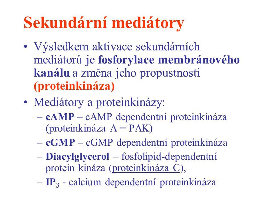 Sekundární mediátory Výsledkem aktivace sekundárních mediátorů je fosforylace membránového kanálu a změna jeho propustnosti (proteinkináza) Mediátory