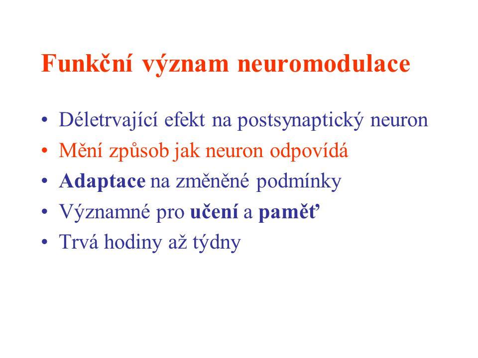 Funkční význam neuromodulace Déletrvající efekt na postsynaptický neuron Mění způsob jak neuron odpovídá Adaptace na změněné podmínky Významné pro uče