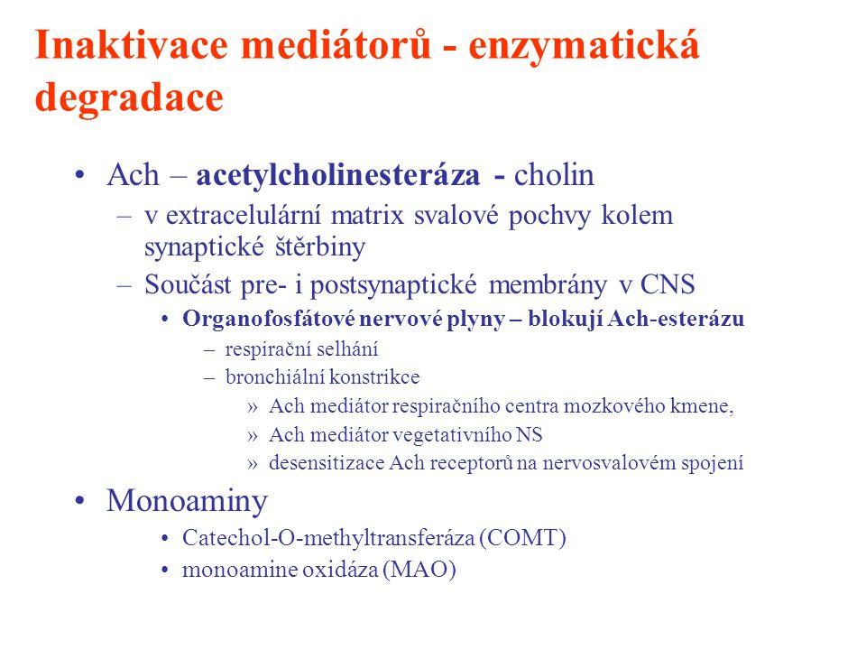 Inaktivace mediátorů - enzymatická degradace Ach – acetylcholinesteráza - cholin –v extracelulární matrix svalové pochvy kolem synaptické štěrbiny –So