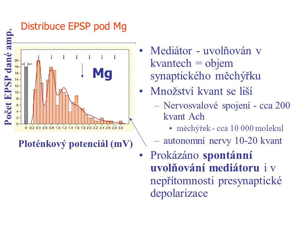 Mediátor - uvolňován v kvantech = objem synaptického měchýřku Množství kvant se liší –Nervosvalové spojení - cca 200 kvant Ach měchýřek - cca 10 000 m