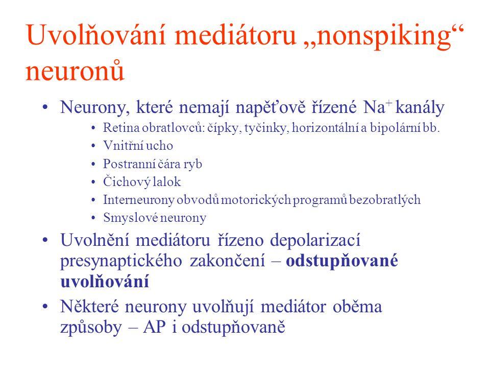 """Uvolňování mediátoru """"nonspiking"""" neuronů Neurony, které nemají napěťově řízené Na + kanály Retina obratlovců: čípky, tyčinky, horizontální a bipolárn"""