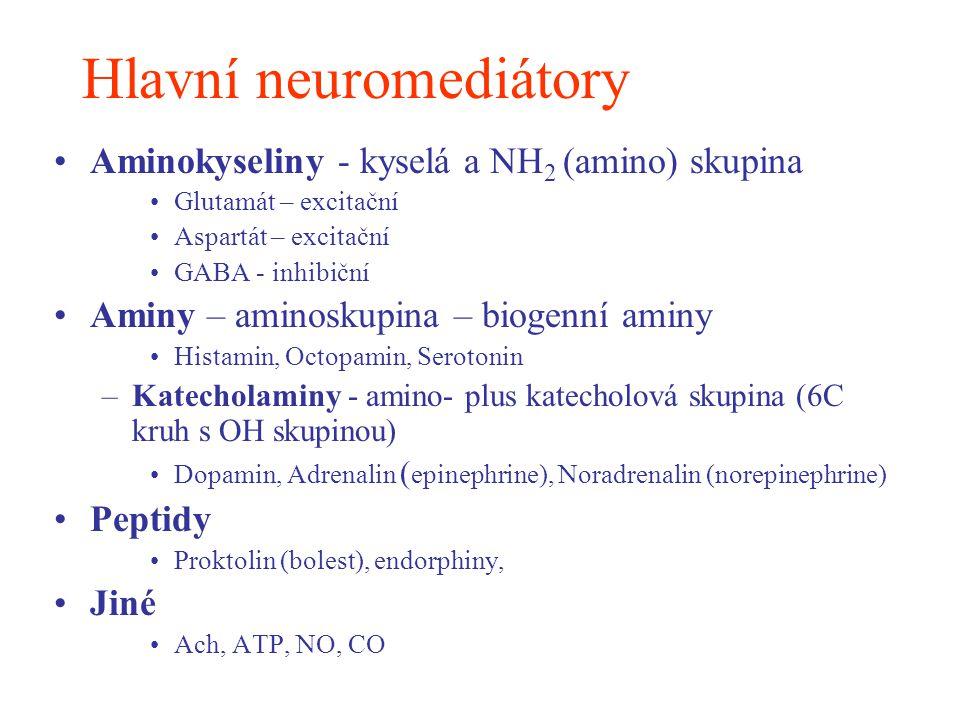 Hlavní neuromediátory Aminokyseliny - kyselá a NH 2 (amino) skupina Glutamát – excitační Aspartát – excitační GABA - inhibiční Aminy – aminoskupina –