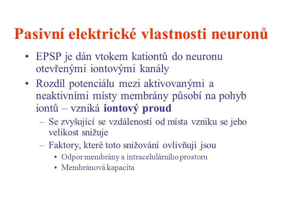 Pasivní elektrické vlastnosti neuronů EPSP je dán vtokem kationtů do neuronu otevřenými iontovými kanály Rozdíl potenciálu mezi aktivovanými a neaktiv