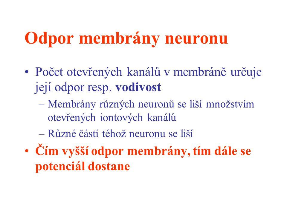 Odpor membrány neuronu Počet otevřených kanálů v membráně určuje její odpor resp. vodivost –Membrány různých neuronů se liší množstvím otevřených iont