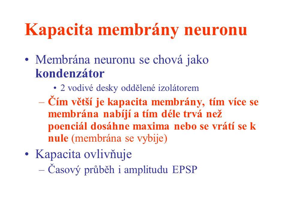 Kapacita membrány neuronu Membrána neuronu se chová jako kondenzátor 2 vodivé desky oddělené izolátorem –Čím větší je kapacita membrány, tím více se m
