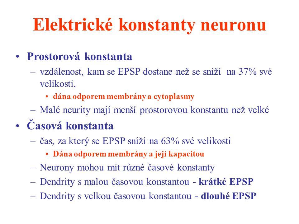 Elektrické konstanty neuronu Prostorová konstanta –vzdálenost, kam se EPSP dostane než se sníží na 37% své velikosti, dána odporem membrány a cytoplas