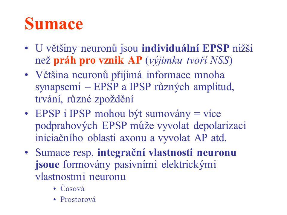 Sumace U většiny neuronů jsou individuální EPSP nižší než práh pro vznik AP (výjimku tvoří NSS) Většina neuronů přijímá informace mnoha synapsemi – EP