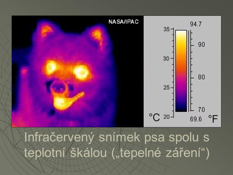 """Infračervený snímek psa spolu s teplotní škálou (""""tepelné záření"""")"""
