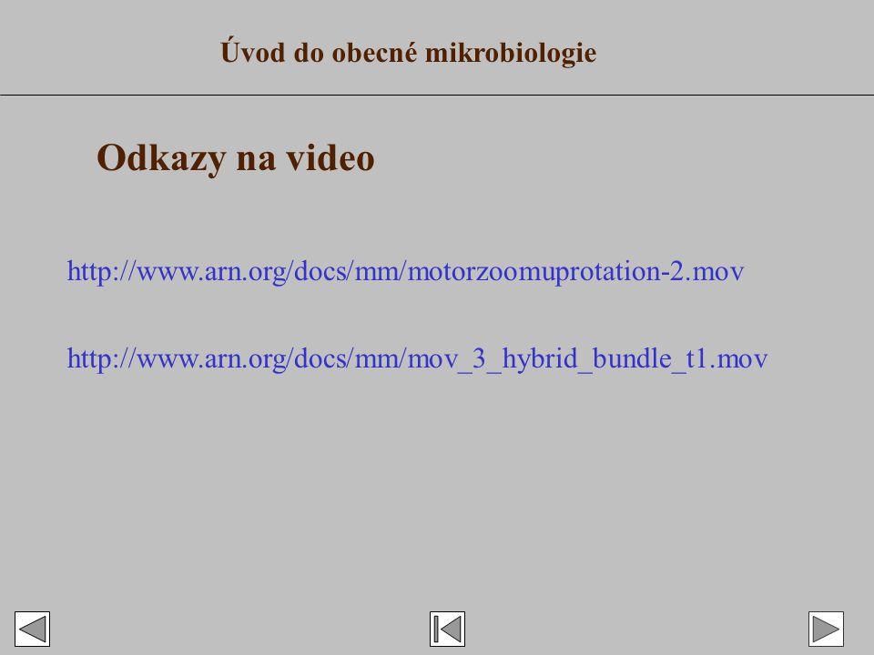 Odkazy na video Úvod do obecné mikrobiologie http://www.arn.org/docs/mm/motorzoomuprotation-2.mov http://www.arn.org/docs/mm/mov_3_hybrid_bundle_t1.mov