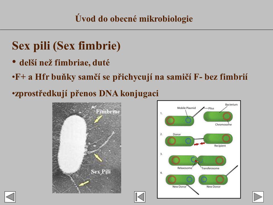 Sex pili (Sex fimbrie) delší než fimbriae, duté F+ a Hfr buňky samčí se přichycují na samičí F- bez fimbrií zprostředkují přenos DNA konjugaci Úvod do