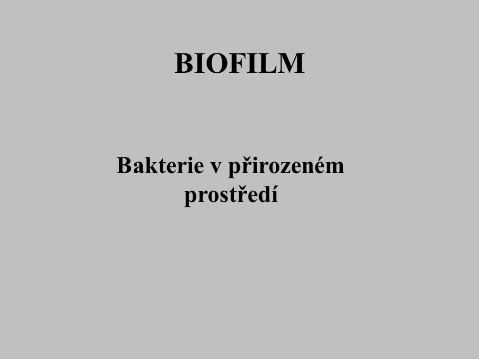 BIOFILM Bakterie v přirozeném prostředí