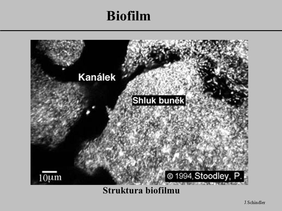 Biofilm J.Schindler Struktura biofilmu