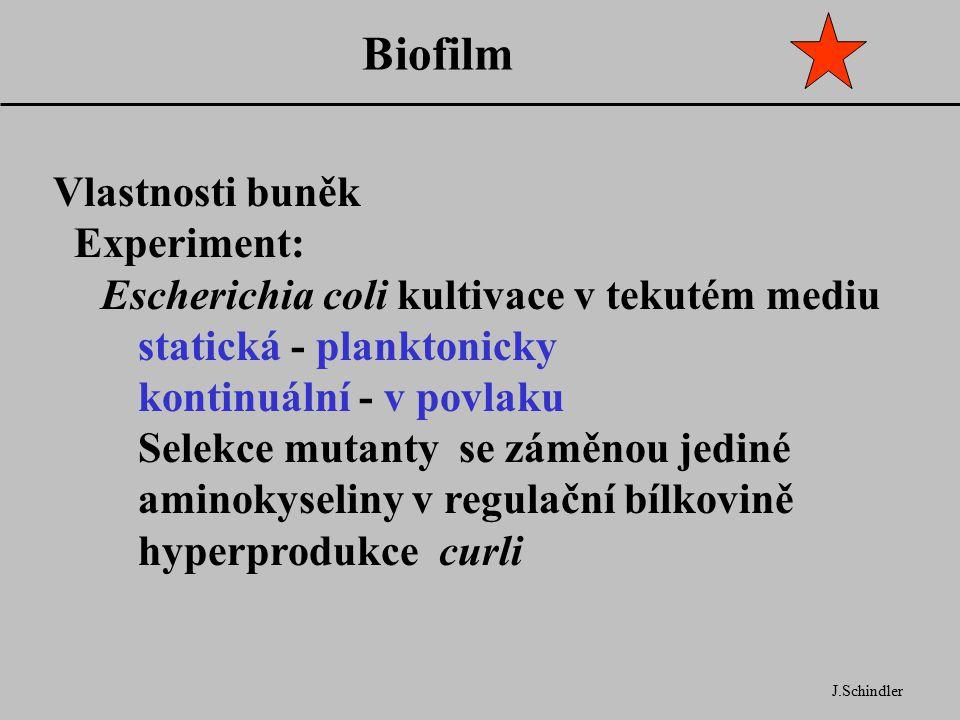 Biofilm J.Schindler Vlastnosti buněk Experiment: Escherichia coli kultivace v tekutém mediu statická - planktonicky kontinuální - v povlaku Selekce mutanty se záměnou jediné aminokyseliny v regulační bílkovině hyperprodukce curli