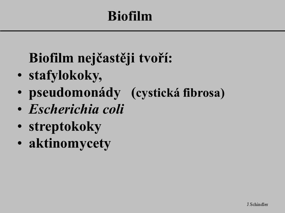 Biofilm J.Schindler Biofilm nejčastěji tvoří: stafylokoky, pseudomonády ( cystická fibrosa) Escherichia coli streptokoky aktinomycety