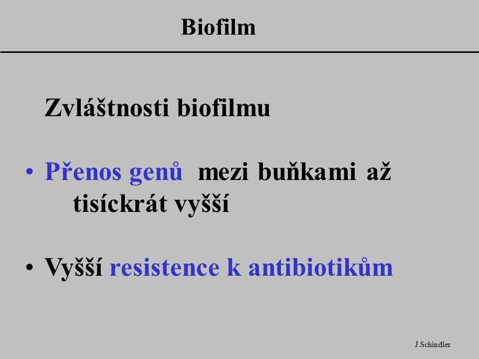Biofilm J.Schindler Zvláštnosti biofilmu Přenos genů mezi buňkami až tisíckrát vyšší Vyšší resistence k antibiotikům