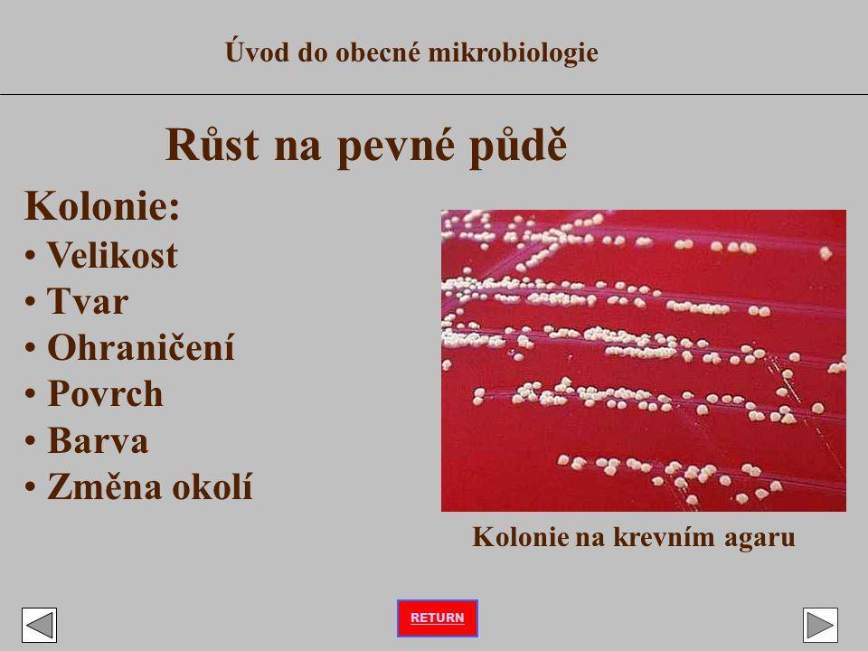 Úvod do obecné mikrobiologie Růst na pevné půdě Kolonie: Velikost Tvar Ohraničení Povrch Barva Změna okolí Kolonie na krevním agaru RETURN