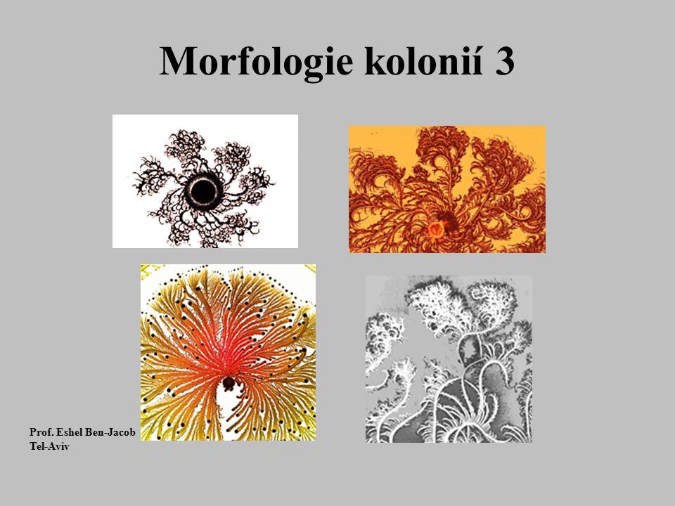 Morfologie kolonií 3 Prof. Eshel Ben-Jacob Tel-Aviv