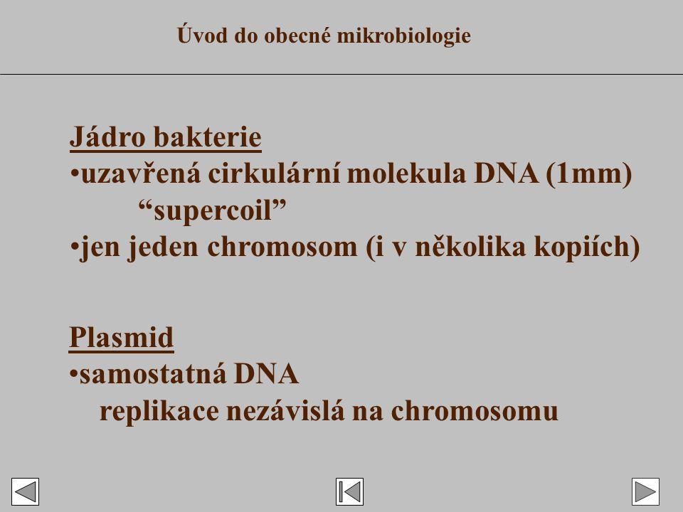 Jádro bakterie uzavřená cirkulární molekula DNA (1mm) supercoil jen jeden chromosom (i v několika kopiích) Plasmid samostatná DNA replikace nezávislá na chromosomu Úvod do obecné mikrobiologie