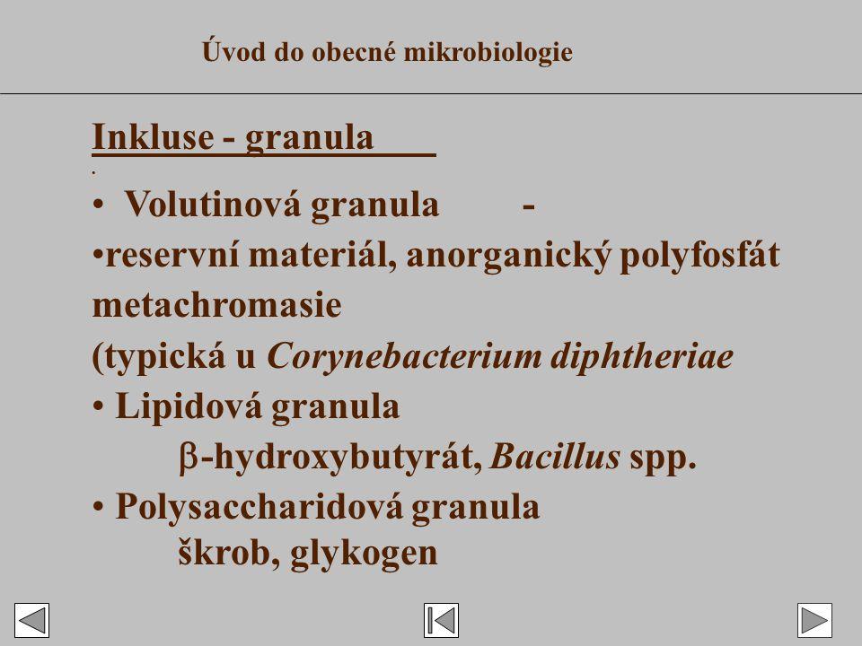 Inkluse - granula.